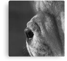 Chow nose Metal Print
