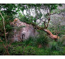 Fanciful Forest by Grimalkin Studio Photographic Print