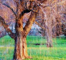 Weeping Willow Magic by Polly Peacock