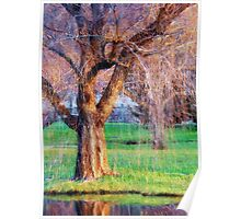 Weeping Willow Magic Poster