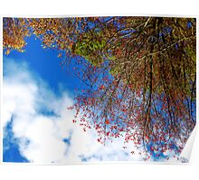 November Trees and Sky Poster