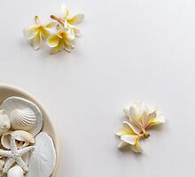 Frangipani and seashells by Justine Gordon