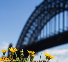 Sydney Harbour bridge by Justine Gordon