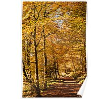 Autumn colors, riverside walk, November 2103  Poster