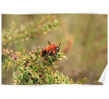 Red Bee on a Leaf Poster