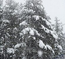 Snowing Heavy - Henniker, NH 02-24-13 by David Lipsy