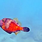 colorful marine jewel (orange tail filefish) by globeboater