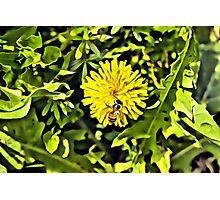 Dandelion flower Linen / Canvas Digital Painting Photographic Print
