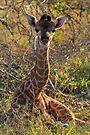 Just born! by Explorations Africa Dan MacKenzie