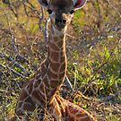 Just born! by Explorations Africa Dan MacKenzie