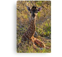 Just born! Canvas Print