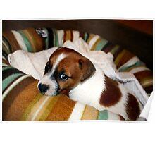 Puppy-dog Eyes Poster