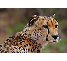 Handsome feline Photographic Print