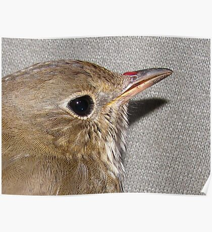 Songbird (see description) Poster