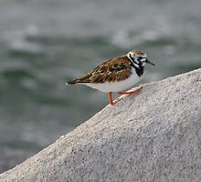 Turnstone Trek by Heather Pickard