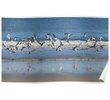 A Wild Flight of Sanderlings - Hampton Beach, NH 10-12-12 Poster