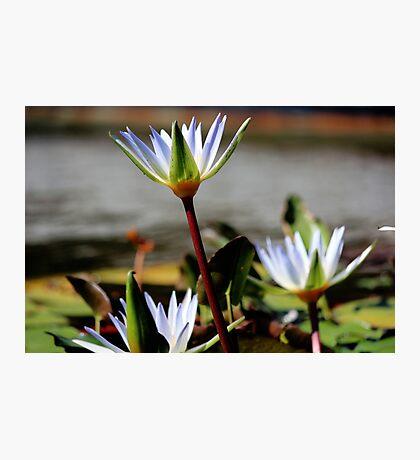 Lotus Position Photographic Print