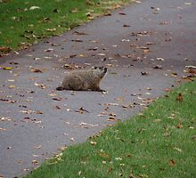 Silly Ol Groundhog by vigor