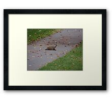 Silly Ol Groundhog Framed Print