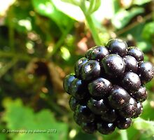 Blackberry by Debsonthesofa
