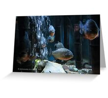 Piranha! Greeting Card