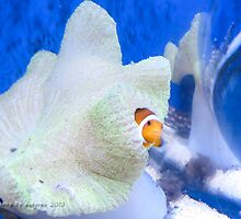 I found Nemo! by Debsonthesofa
