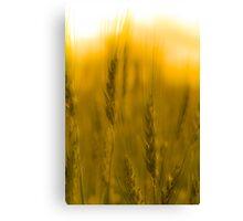 Prairie Gold Canvas Print
