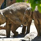 Elephants  by Tom Newman