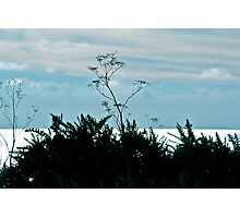 Twig Photographic Print