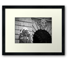 Lion With Snow Cap Framed Print