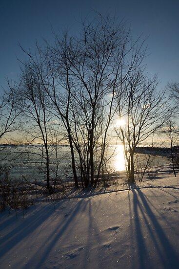 Long Shadows in the Snow by Georgia Mizuleva