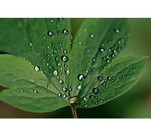 Green Crystals Photographic Print