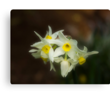 Softly Daffodils Canvas Print