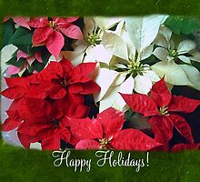 Mixed color Poinsettias 1 Happy Holidays P1F1 by Christopher Johnson