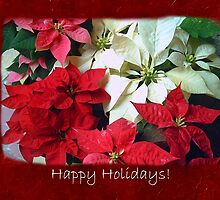 Mixed color Poinsettias 1 Happy Holidays P5F5 by Christopher Johnson