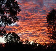 Bogantungan Qld, Sunset  by Virginia  McGowan