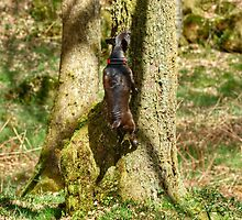 Arboreal Terrier by VoluntaryRanger