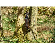 Arboreal Terrier Photographic Print