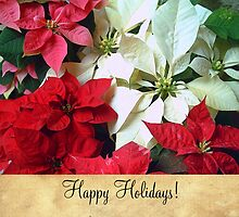 Mixed color Poinsettias 1 Happy Holidays S2F1 by Christopher Johnson