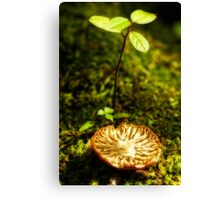 broken cap Canvas Print