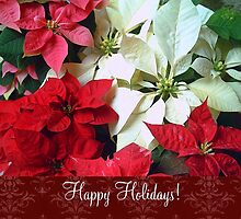 Mixed color Poinsettias 1 Happy Holidays S5F1 by Christopher Johnson