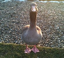 Goose by jeremyab