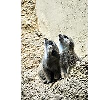 Opossum Photographic Print