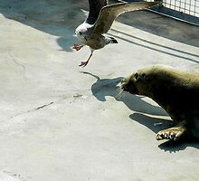 Seal vs Sea Gull by inahw