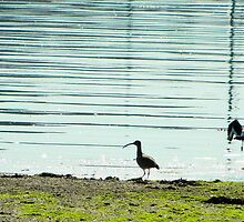 Curlews by inahw