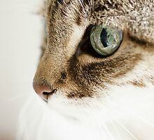 Cute Cat by PhotoFineart