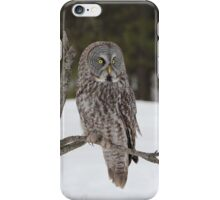 Great Grey Owl iphone/Samsung Galaxy case iPhone Case/Skin