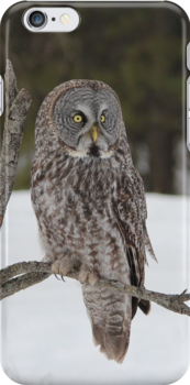 Great Grey Owl iphone/Samsung Galaxy case by hummingbirds