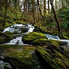 It's A Green World ~ Creek ~ by Charles & Patricia   Harkins ~ Picture Oregon