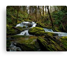 It's A Green World ~ Creek ~ Canvas Print